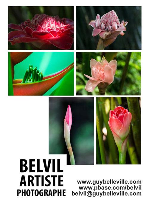 Plante exotique 1