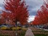 L'automne au centre-ville